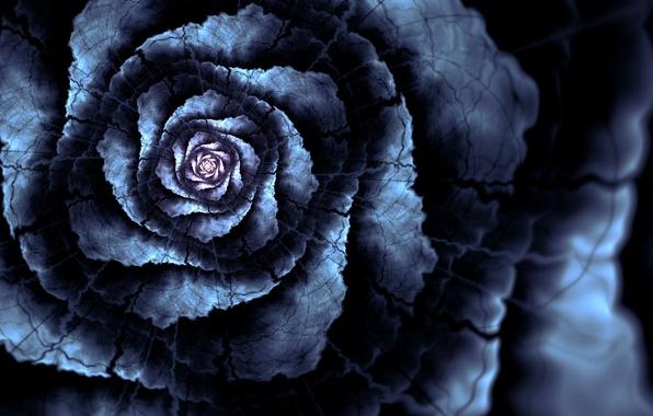 Picture flower, line, cracked, petals, art