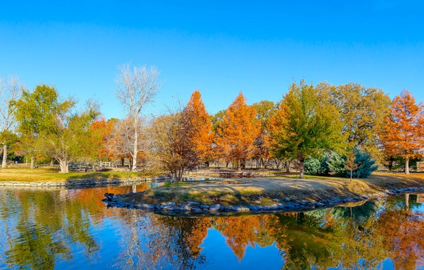 Picture leaves, trees, pond, USA, Texas, Clark Gardens, Botanical Park, a crimson autumn