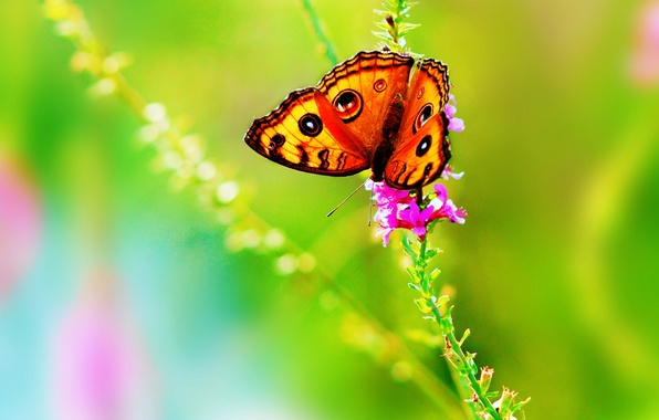 Picture flower, summer, color, nature, butterfly, bright, insect