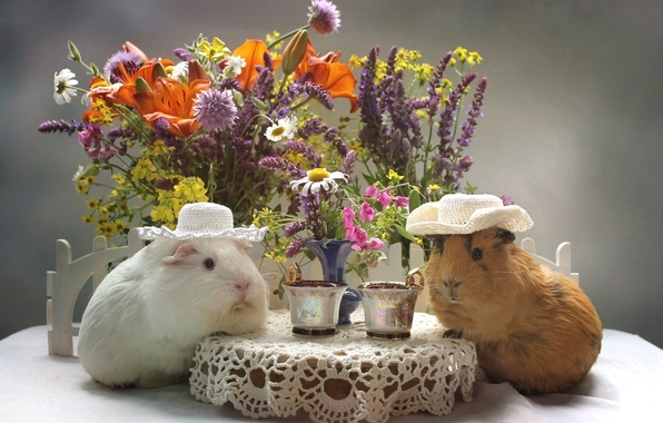 Picture flowers, Lily, bouquet, hat, Cup, Guinea pig