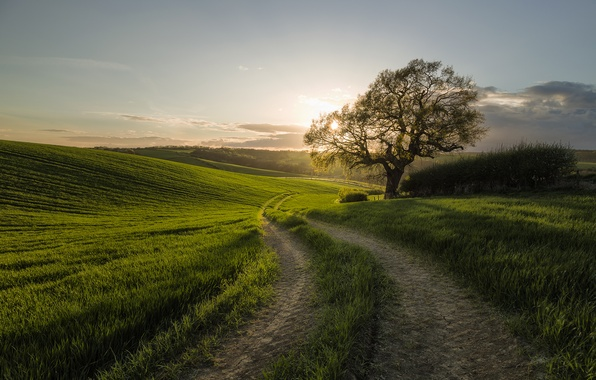 Picture road, field, morning
