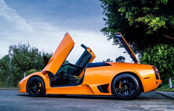 Picture orange, tree, Lamborghini, murcielago, tree, lp640, roadster, orange, Lamborghini, murciélago