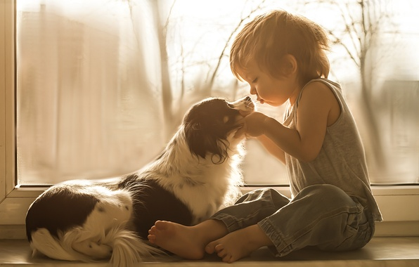 Picture dog, boy, window, friends, on the windowsill