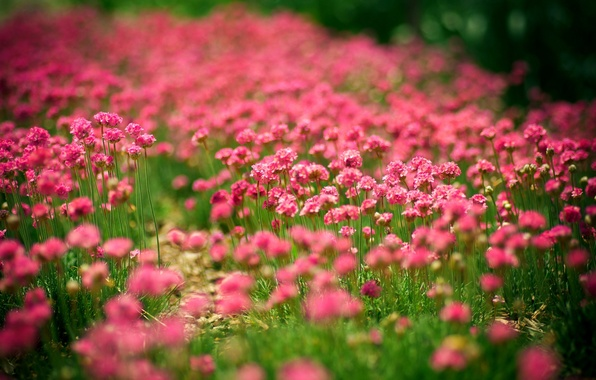 Picture summer, the sun, flowers, nature, glade, summer, nature, flowers, sun, meadow