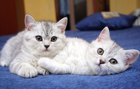Picture cats, cats, kittens