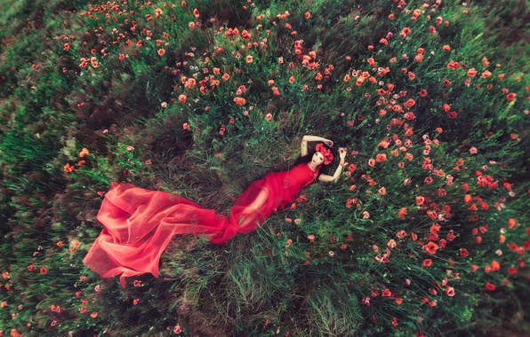 Picture field, girl, flowers, Maki, dress in red