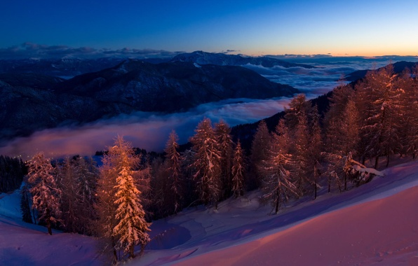 Picture forest, snow, mountains, night, tree, Magic forest