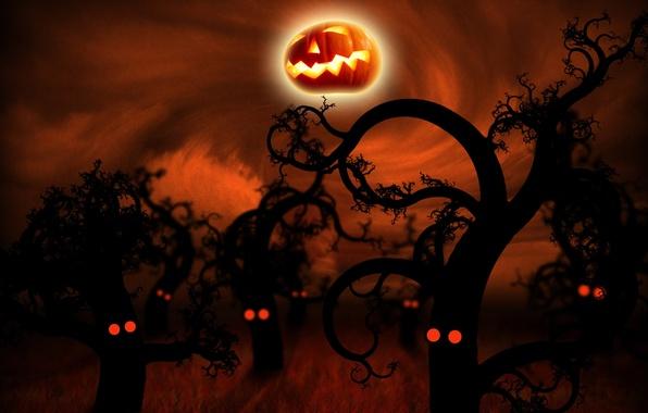 Picture dark, halloween, pumpkin