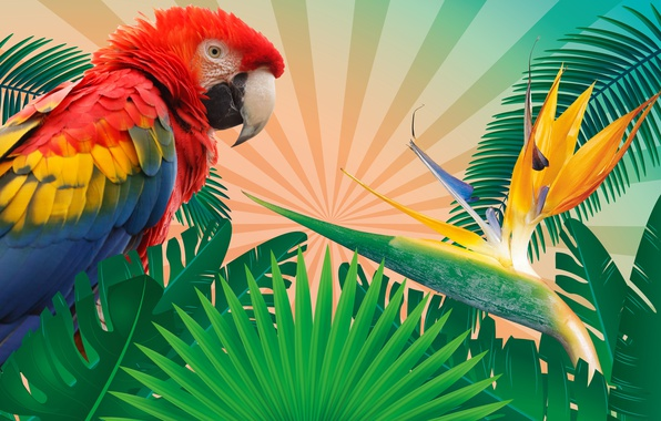 Picture leaves, branches, tropics, rendering, background, bird, vector, feathers, parrot, colorful