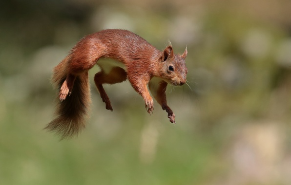 Picture jump, protein, red, flight, in flight, bokeh