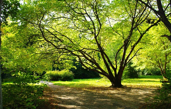 Picture summer, leaves, nature, Park, tree, earth, romance, plants