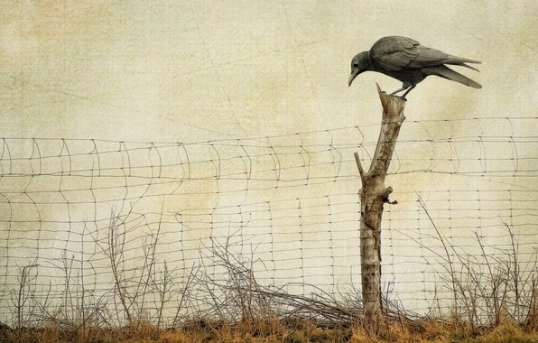 Picture style, background, the fence, Raven