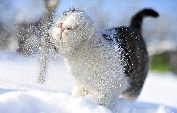 Picture cat, mustache, snow, snow, paws, blur, tail, shower, cat, Tomcat, snowy, Amateur, takes, bokeh., chill, …