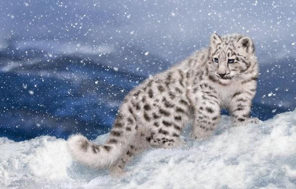 Picture winter, snow, rendering, IRBIS, snow leopard, kitty