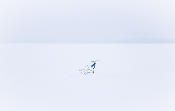 Picture snow, minimalism, branch