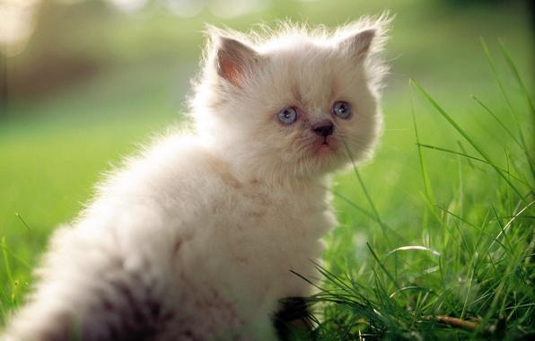 Picture cat, white, grass, cat, macro, kitty, cute, cat