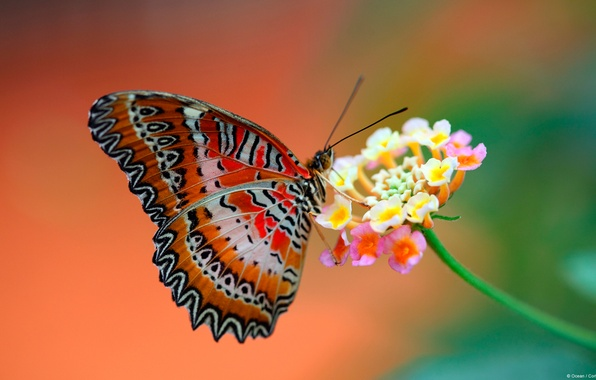 Picture flower, background, butterfly, wings