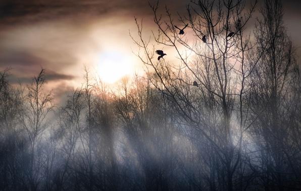 Picture birds, fog, morning