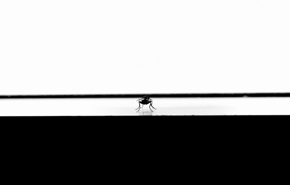 Picture fly, minimalism, window
