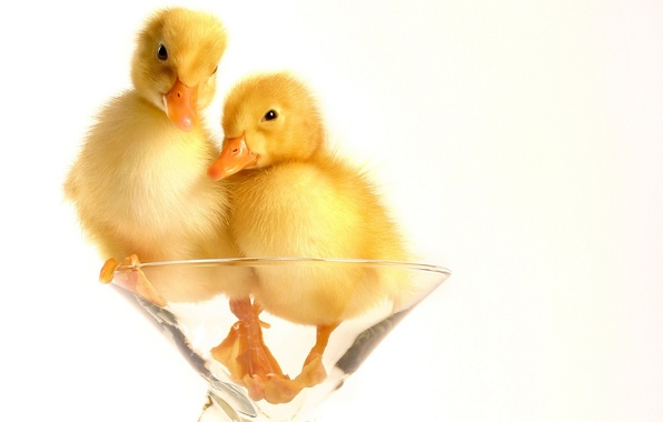 Picture Fluff, Glass, Ducklings