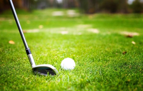 Picture grass, ball, player, golf club