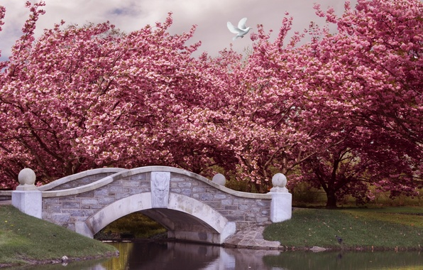 Picture trees, bridge, Park, river, spring, garden, flowering, pink, blossom, park, spring