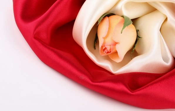 Picture flower, flowers, roses, silk, Bud, fabric, silk