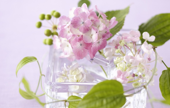 Picture glass, leaves, flowers, petals, vase