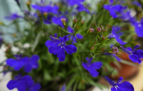 Photo wallpaper flowers, macro, blue, nature