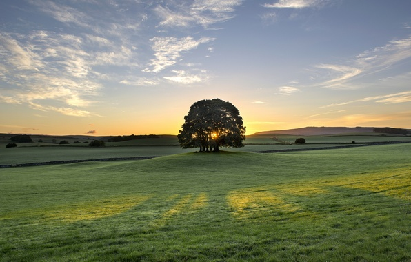 Picture sunrise, tree, dawn, England, morning, meadow, England, Bell Busk