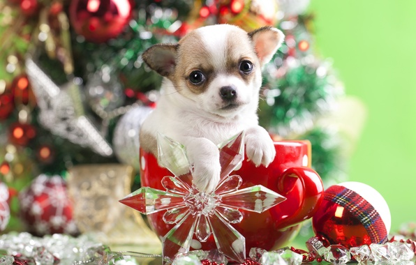Picture decoration, dog, ball, mug, puppy, snowflake, doggie, Chihuahua
