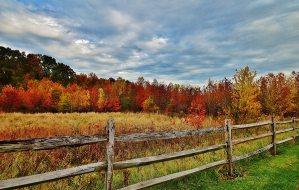 Picture autumn, forest, the sky, grass, leaves, trees, the fence, fence