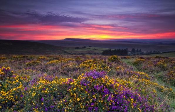 Picture field, landscape, sunset, flowers
