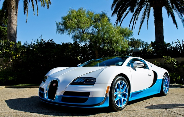 Picture white, blue, palm trees, veyron, bugatti, Bugatti, Veyron, Vitesse