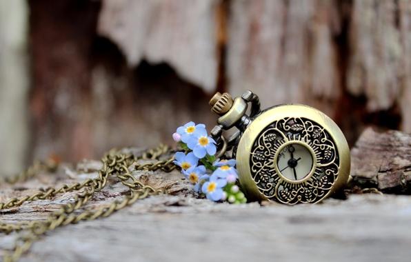 Picture love, flowers, petals, bokeh
