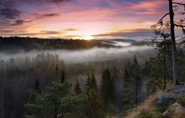 Picture forest, trees, nature, fog, sunrise, morning, Finland, Finland, Us National Park