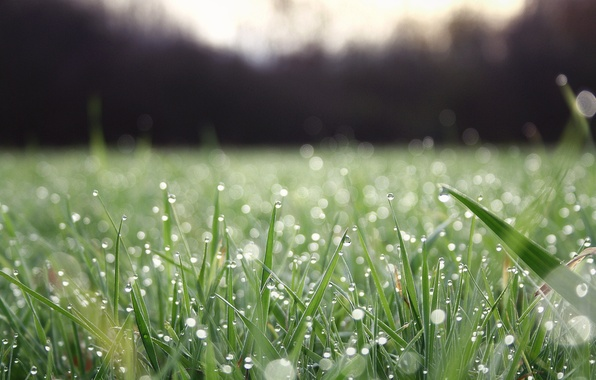 Picture greens, grass, water, drops, macro, freshness, nature, Rosa