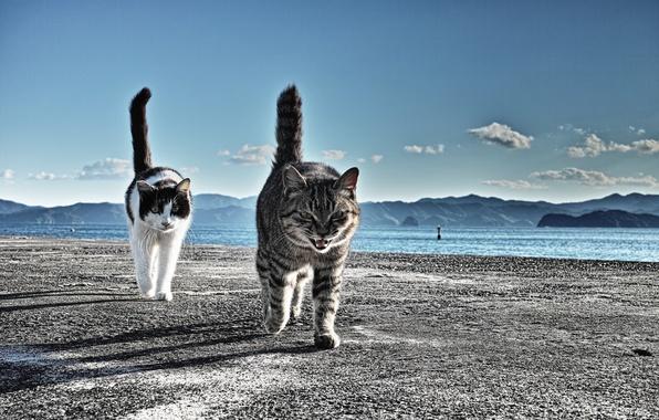 Picture Koshak, cats, Marina, go, tails, beware
