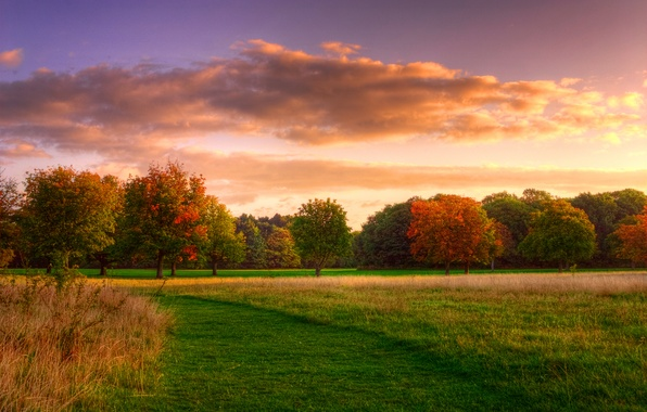 Picture field, forest, the sky, grass, clouds, trees, nature, sunrise