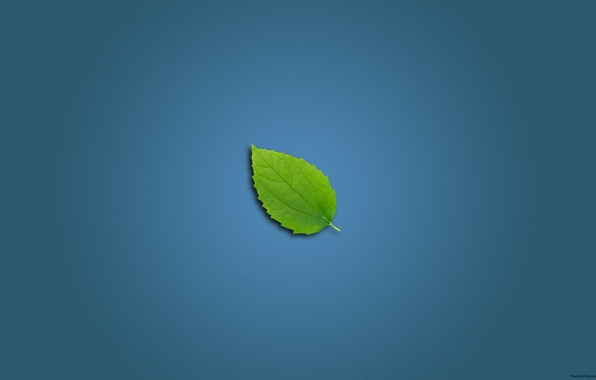 Picture blue, sheet, green, background, blue, minimalism, leaf wall