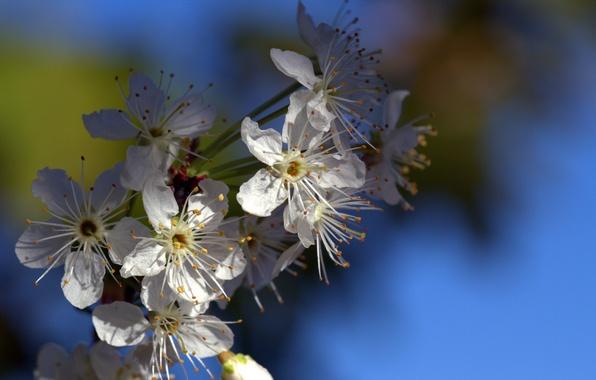 Picture flowers, branch, spring, petals, garden