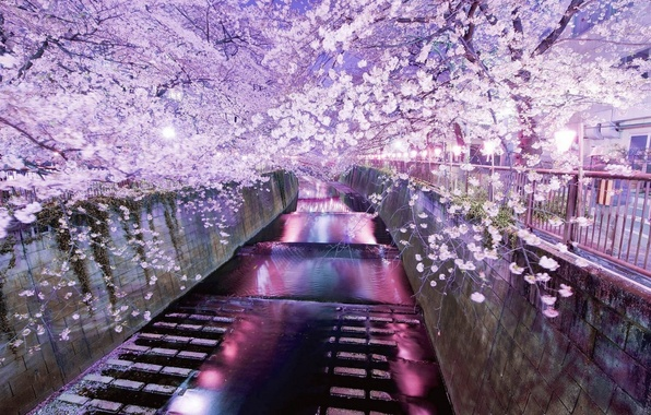 Picture reflection, spring, the evening, Sakura, Tokyo, flowering, water channel