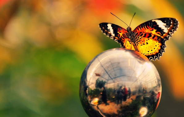 Picture color, reflection, butterfly, ball, brightness