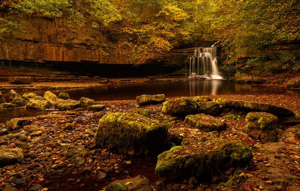 Picture forest, trees, rock, stream, stones, waterfall, stream