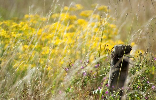 Picture flowers, bokeh, meadow