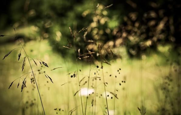 Picture grass, nature, plants, bokeh