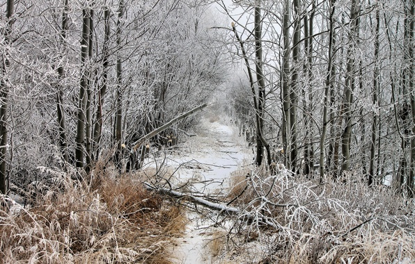Picture winter, frost, forest, snow, clearing, fallen tree