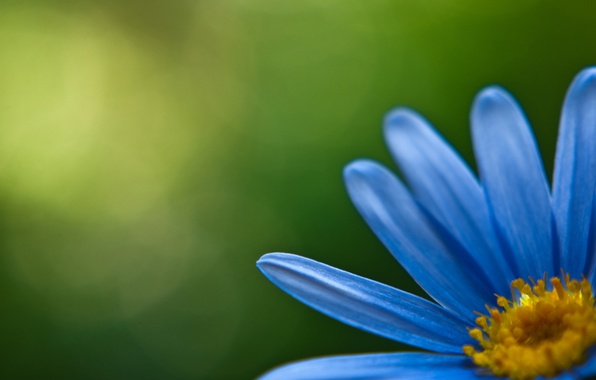 Picture flowers, blue, yellow, green, petals, petal, flowers, flowers, beautiful Wallpaper, branches, flower, flowers wallpapers, Wallpapers
