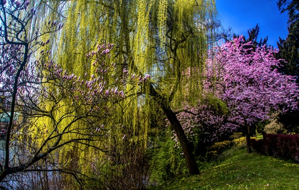 Picture grass, trees, pond, spring, garden, blooming