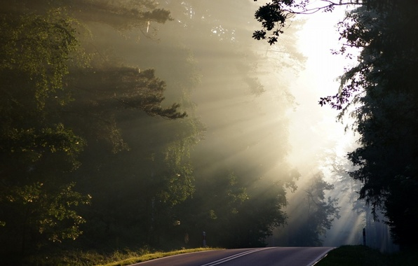 Picture road, forest, nature, fog